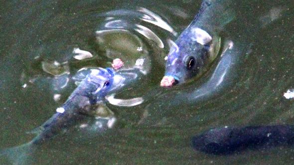 fishhaiti